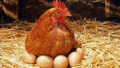 1000-2000 Tavuk Çiftliği Kurma Kredisi ve Projeleri