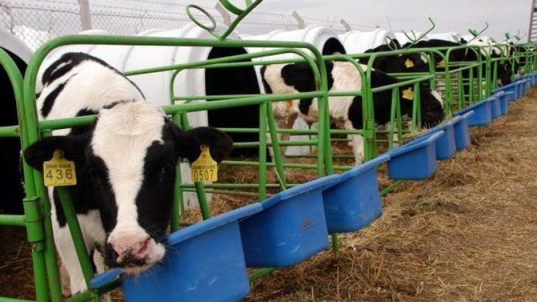 5 ve 10 Büyükbaş Hayvan Çiftliği Maliyeti ve Proje Örnekleri