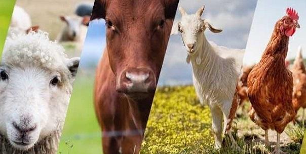 7 Yıl Vadeli Hayvancılık Kredisi Şartları