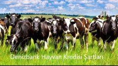 Denizbank Hayvan Kredisi 2019 Şartları