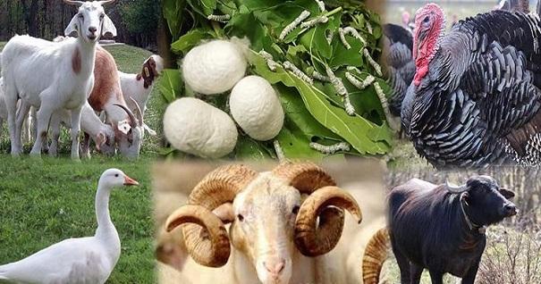 Hayvancılık alanındaki proje konuları
