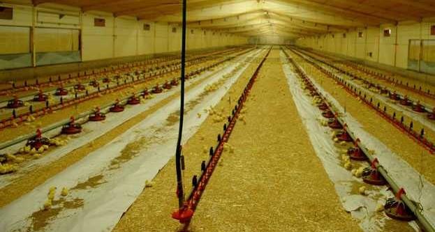 Prefabrike çiftlik kurulumunun kapasitesine göre maliyeti