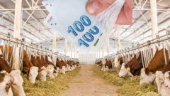 Ziraat Bankası 2 Yıl Geri Ödemesiz Hayvan Kredisi