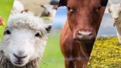 Ziraat Bankası Hayvan Kredisi için Gerekli Evraklar