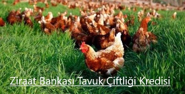 Ziraat Bankası Tavuk Çiftliği Kredisi