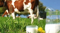 Çiğ Süt Destekleme Ödemeleri 2020