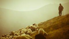 Çoban (Sürü Yöneticisi) Desteklemesi 2019-2020 Yılında Ne Zaman Ödenecek?
