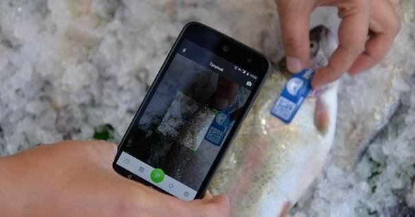Balık Tanıma Kartı Desteği
