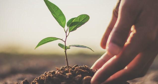 Devletten Çiftçiye Yurt İçi Sertifikalı Fidan Üretim Desteği