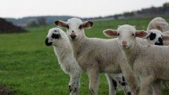 Hayvan Genetik Koruma 2019-2020 Destekleme Ödemeleri
