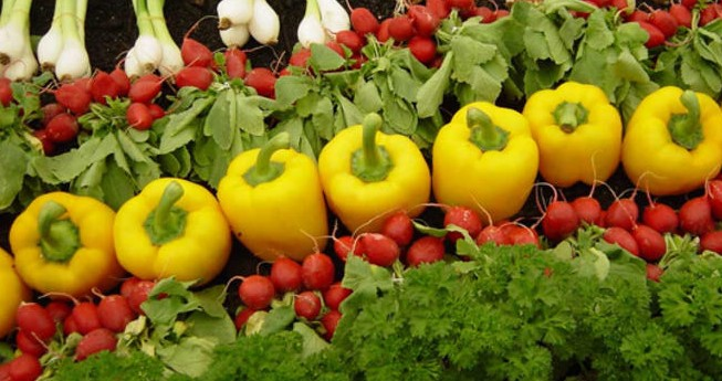 Organik Tarım Desteklemesi İçin Gerekli Koşullar
