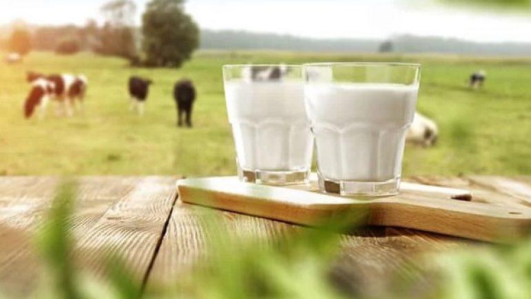 Süt Parası Ne Zaman Yatar? 2019-2020 Destekleme Ödemeleri