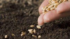 Tohum Destekleme Parası Ne Zaman Ödenecek 2019-2020 Dönemi