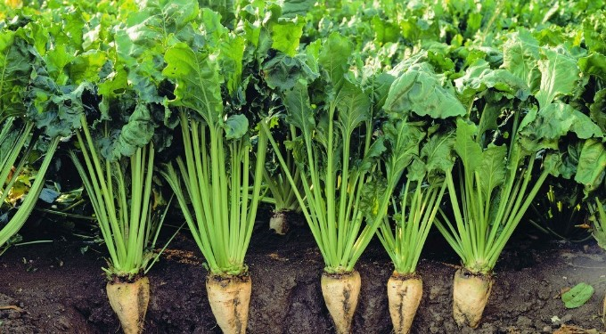 Yem Bitkileri Destekleme Başvuruları Nasıl Yapılır?