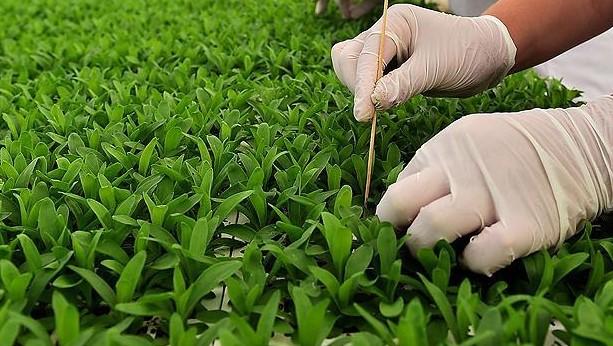 Yurtiçi Sertifikalı Tohum Üretim Desteği
